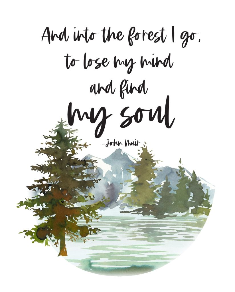And into the forest I go to lose my mind and find my soul - John Muir